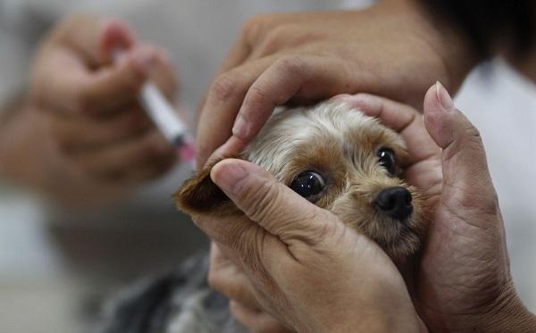 Прививка от бешенства для человека