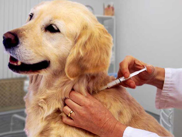 Прививки для щенков