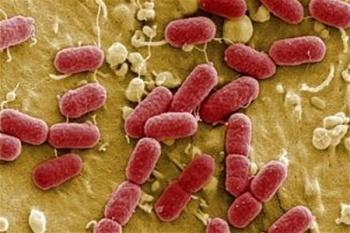 Эпидемия: описание и исторические факты